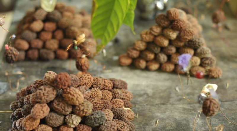 Rudraksha help in curing heart diseases