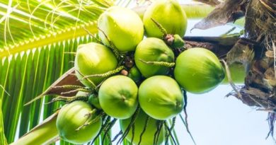 benefits of drinking coconut water